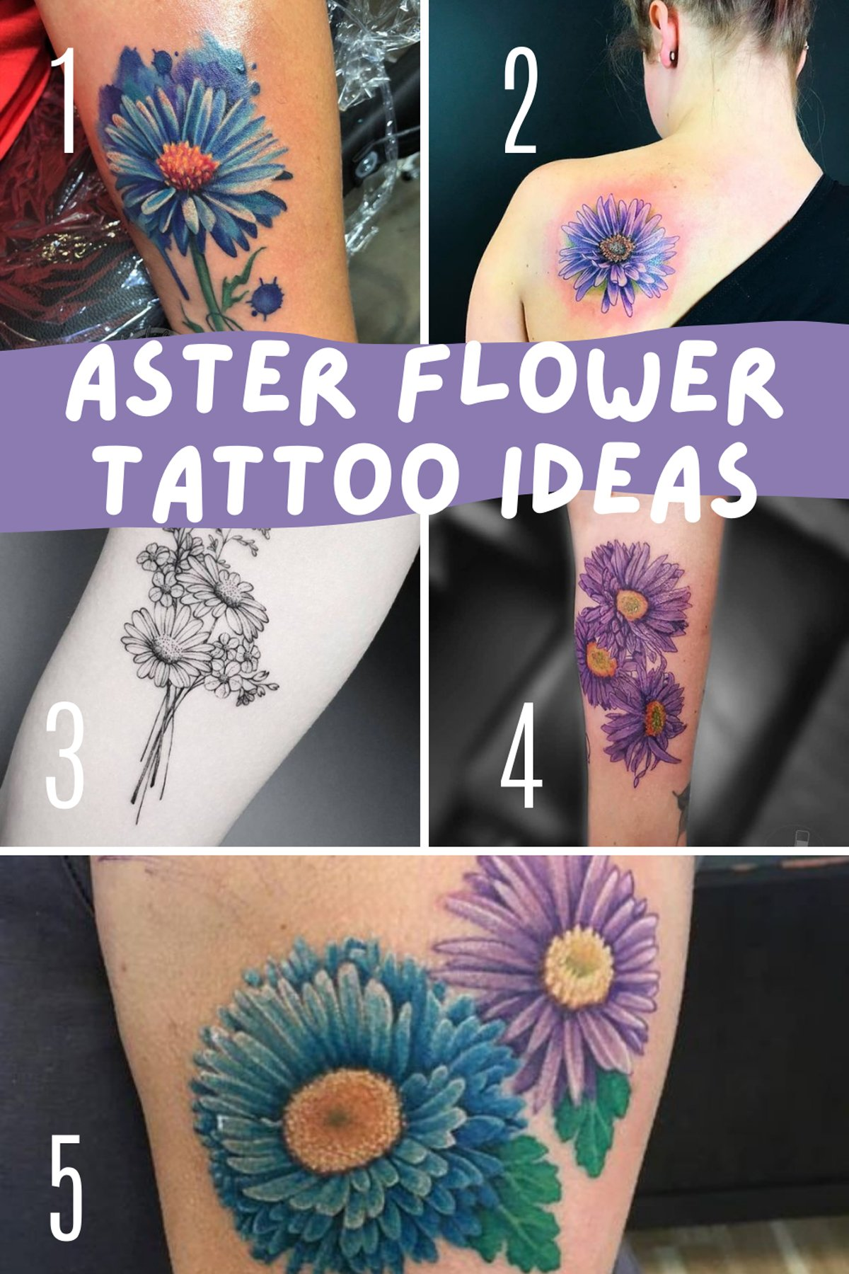 History of Aster Flower Tattoos