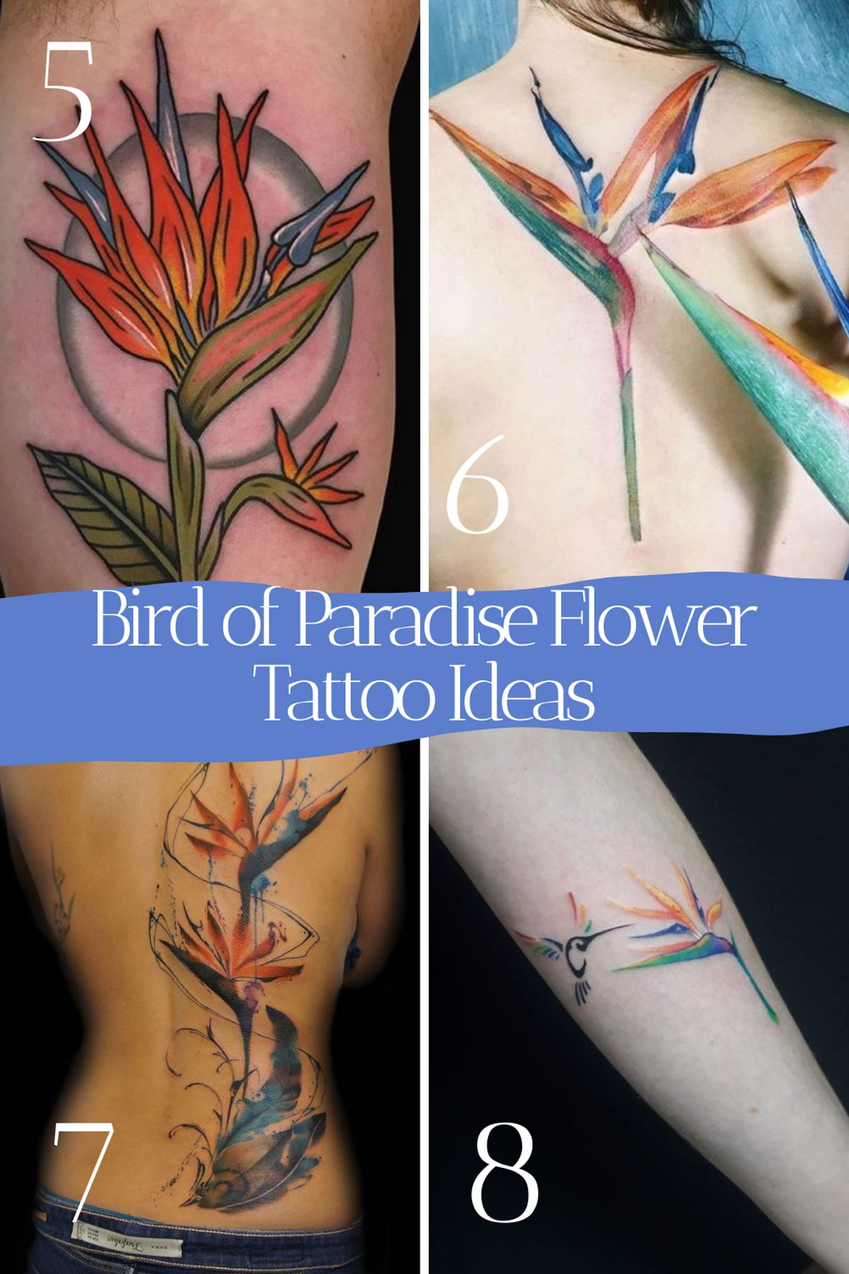 Bird of Paradise Flower Ink Designs