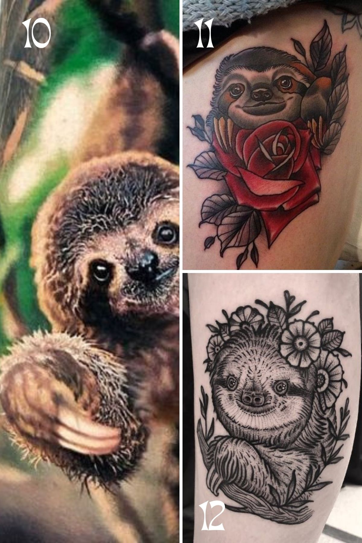 Detailed Sloth Designs